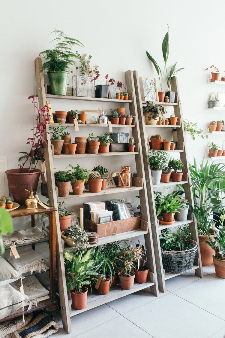 These Are the Prettiest Plant Shops In the World