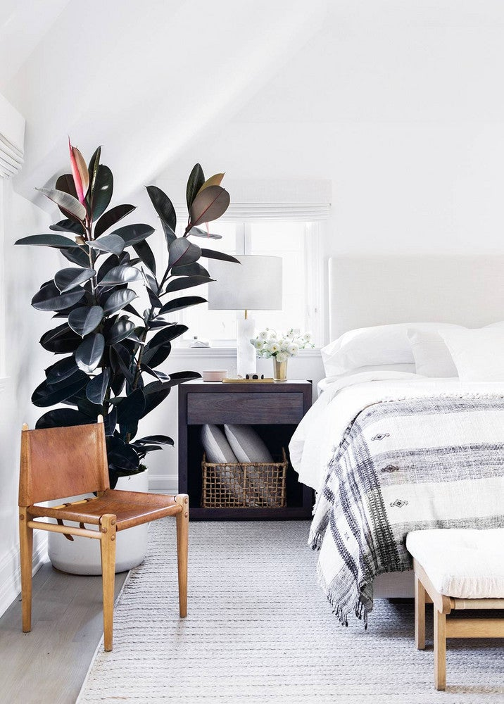rubberplant slaapkamer kamerplant