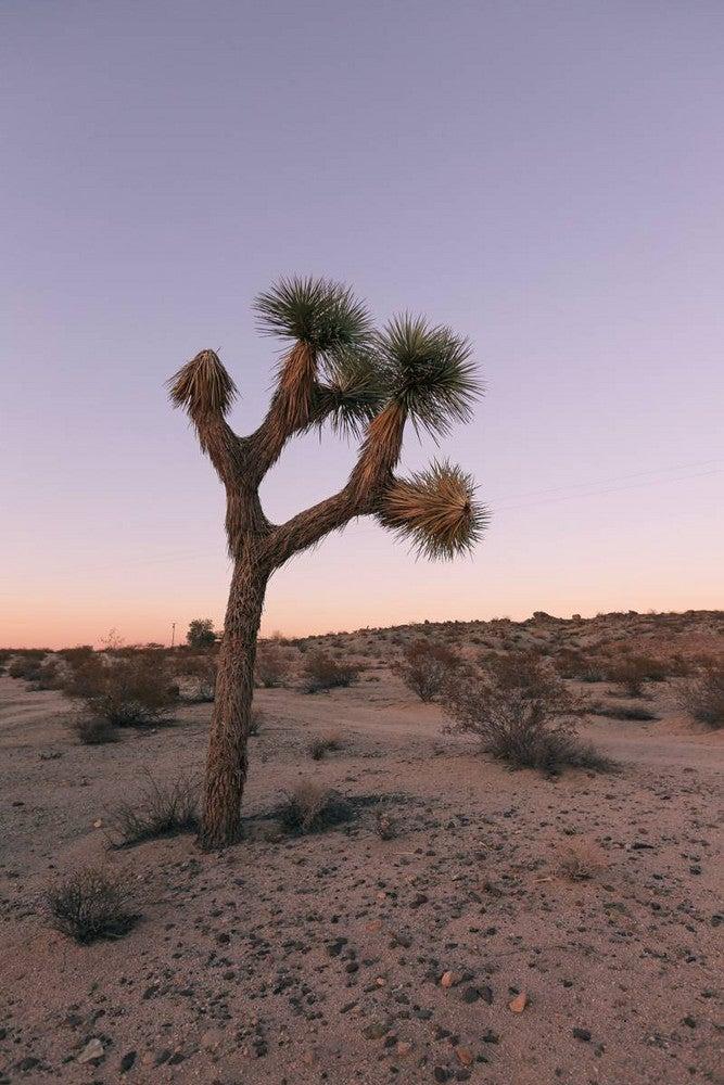 Joshua Tree Casita Rental Desert Exterior