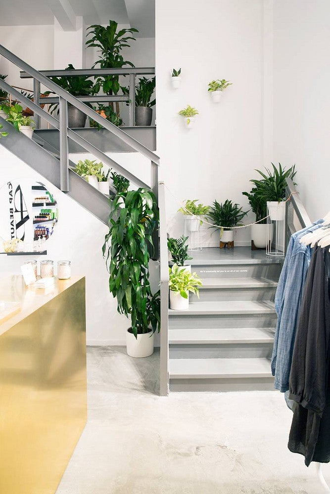 lou and grey nyc store plant wall