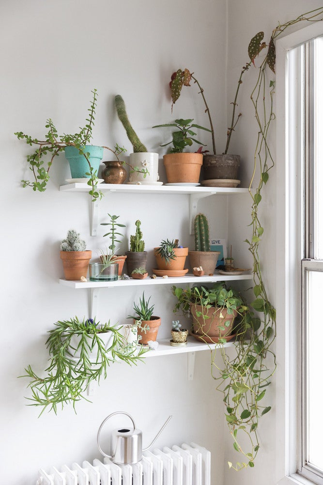 plant wall succulents