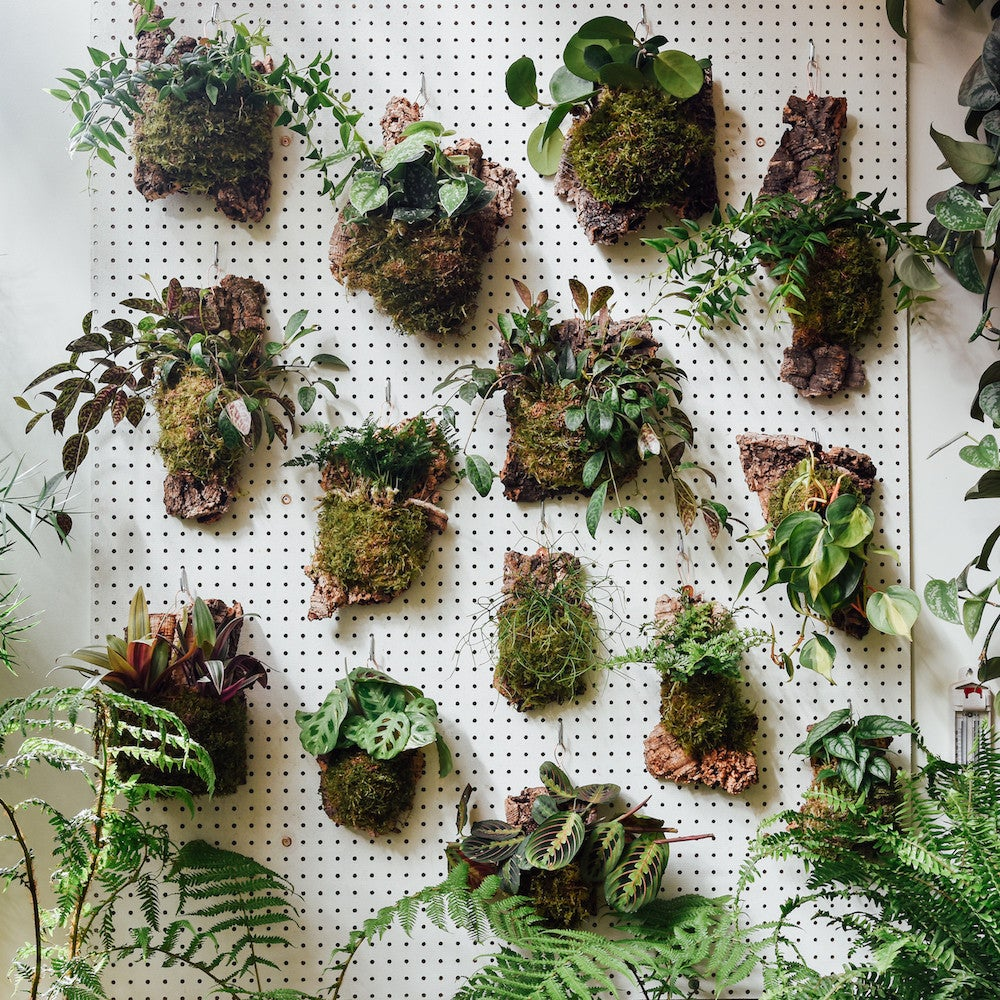 How To Build Vertical Garden Living Wall Plant Guide