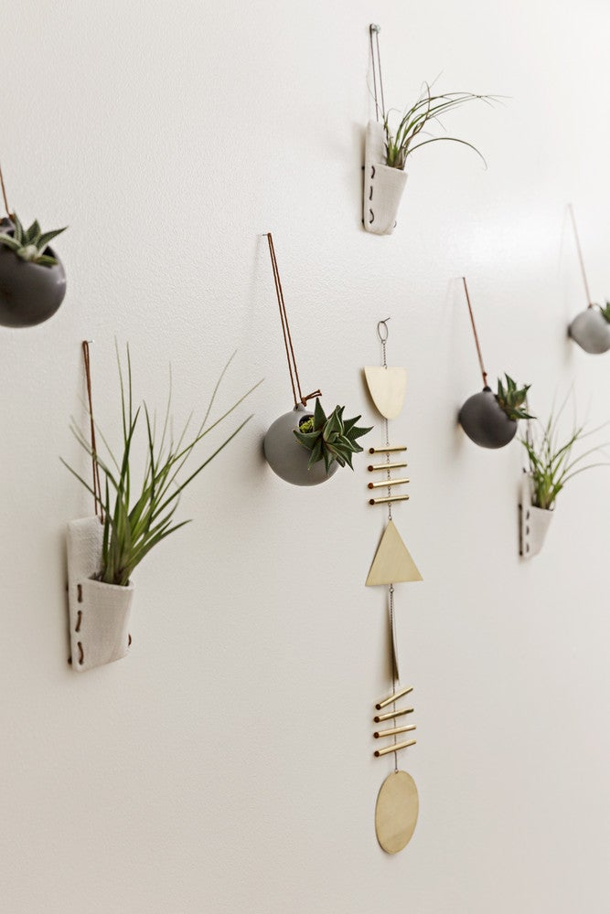 hanging air plants on the wall