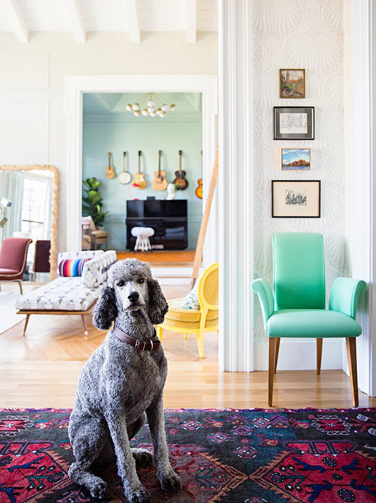 stylish poodle in entryway