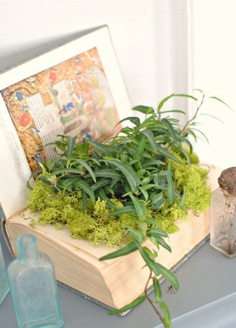 how to decorate with house plants