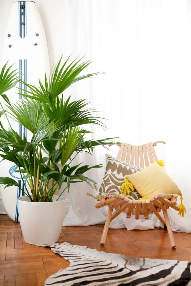 wood chair with zebra rug and plant