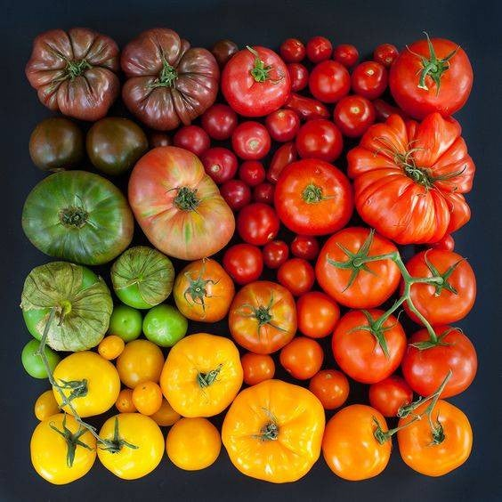 what to keep in the fridge heirloom tomatoes