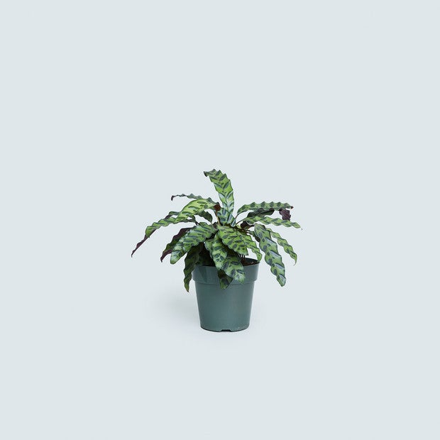 patterned plant decor