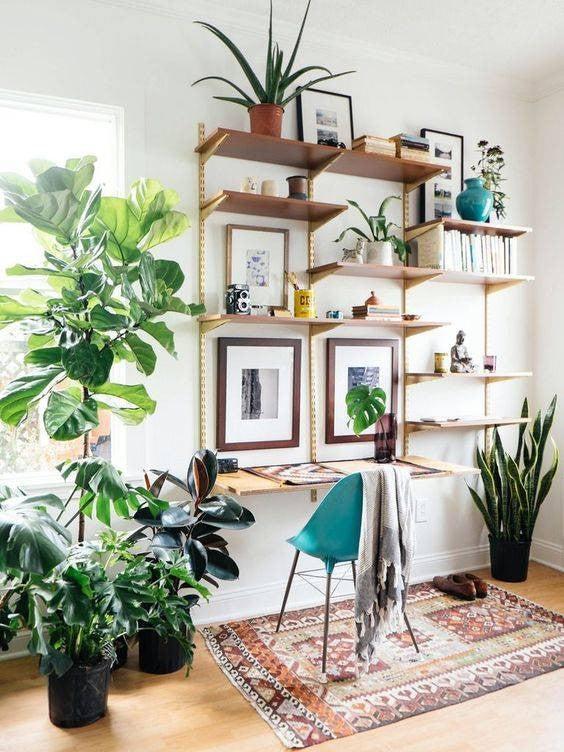 . Small Indoor Garden Ideas   Domino