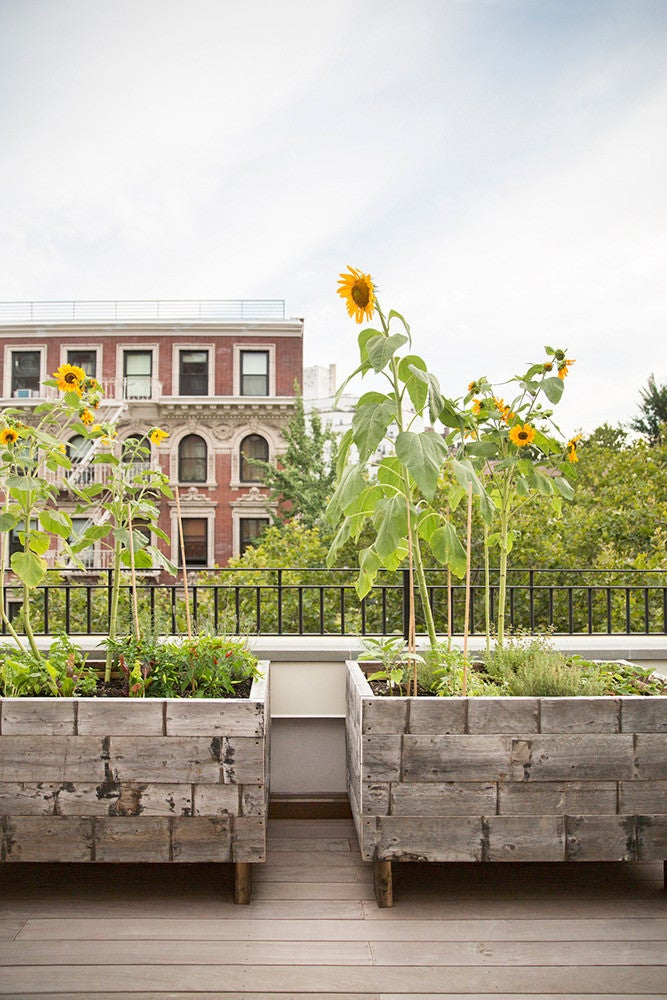 West Village Townhouse Alison Cayne Green Outdoor