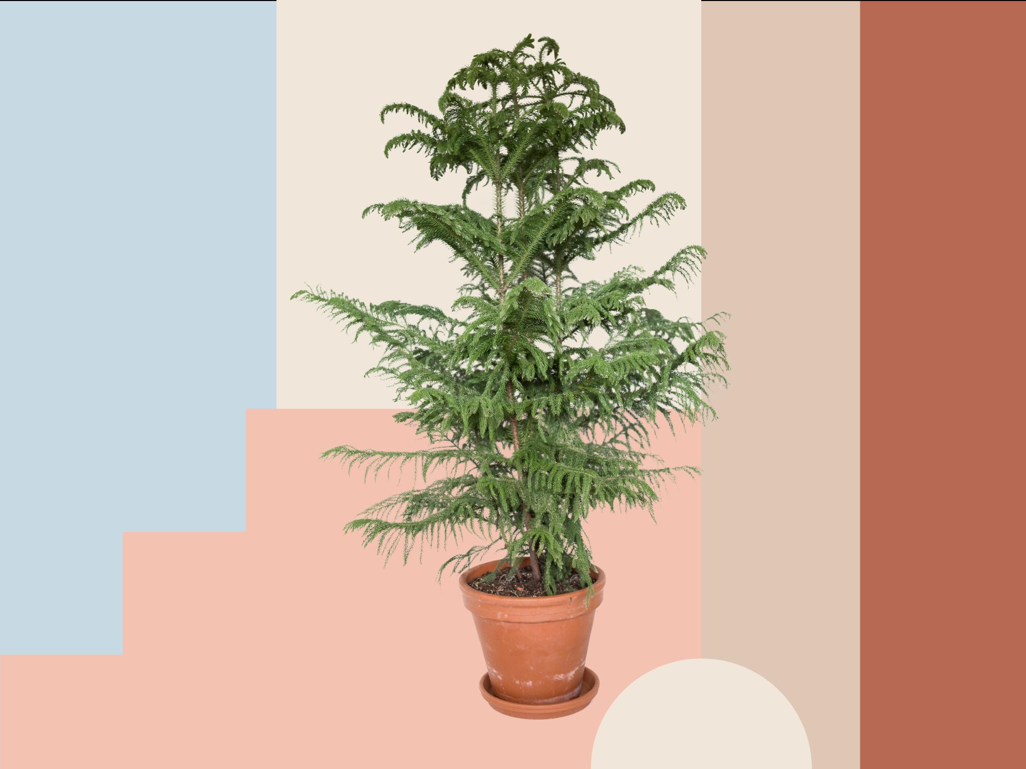 christmas-alternatives tree