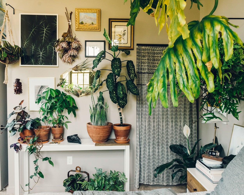 Corner Decoration Pieces Indoor Plants For Living Room