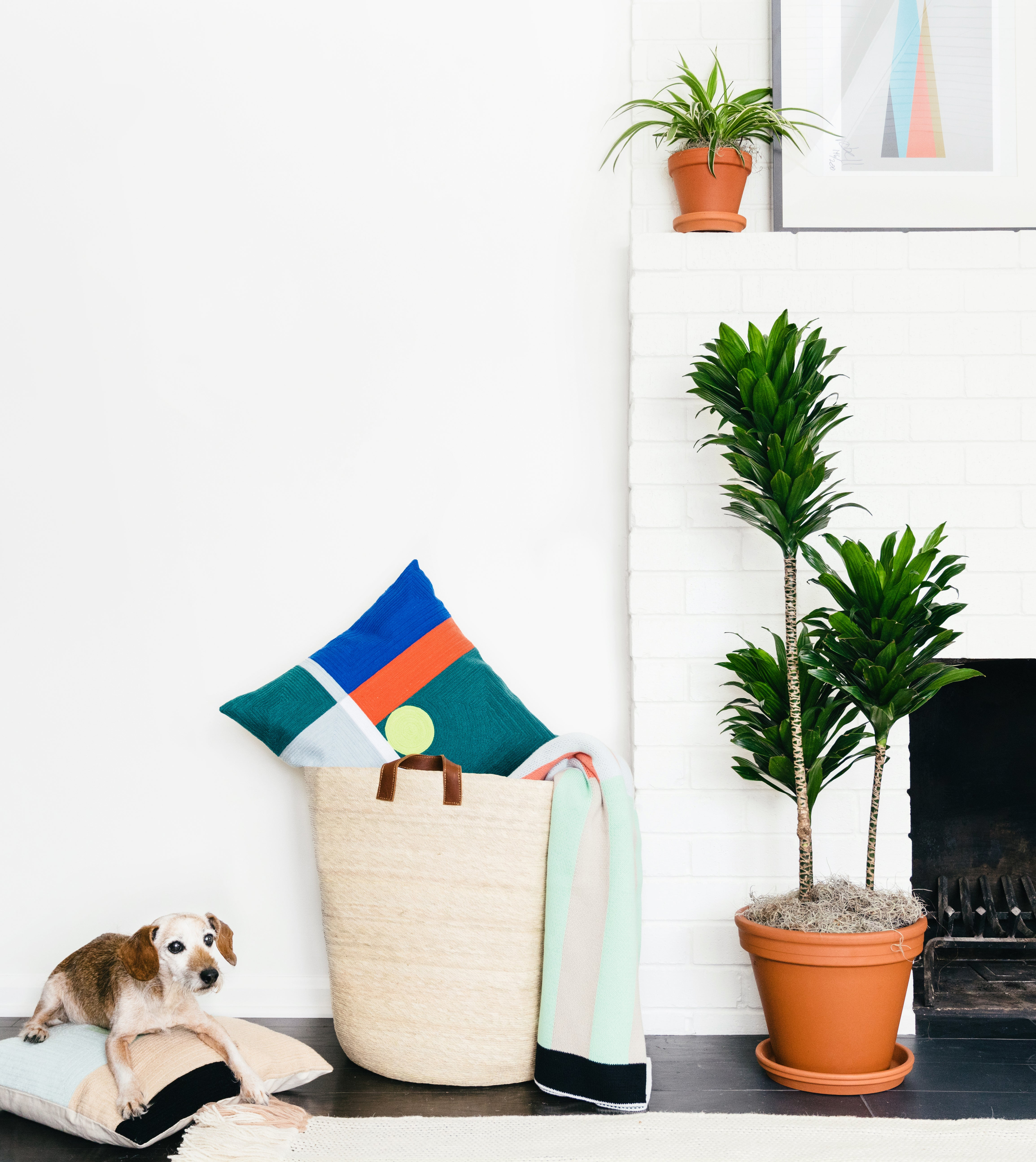 The Most Popular Indoor Plants of 2019, According to Experts