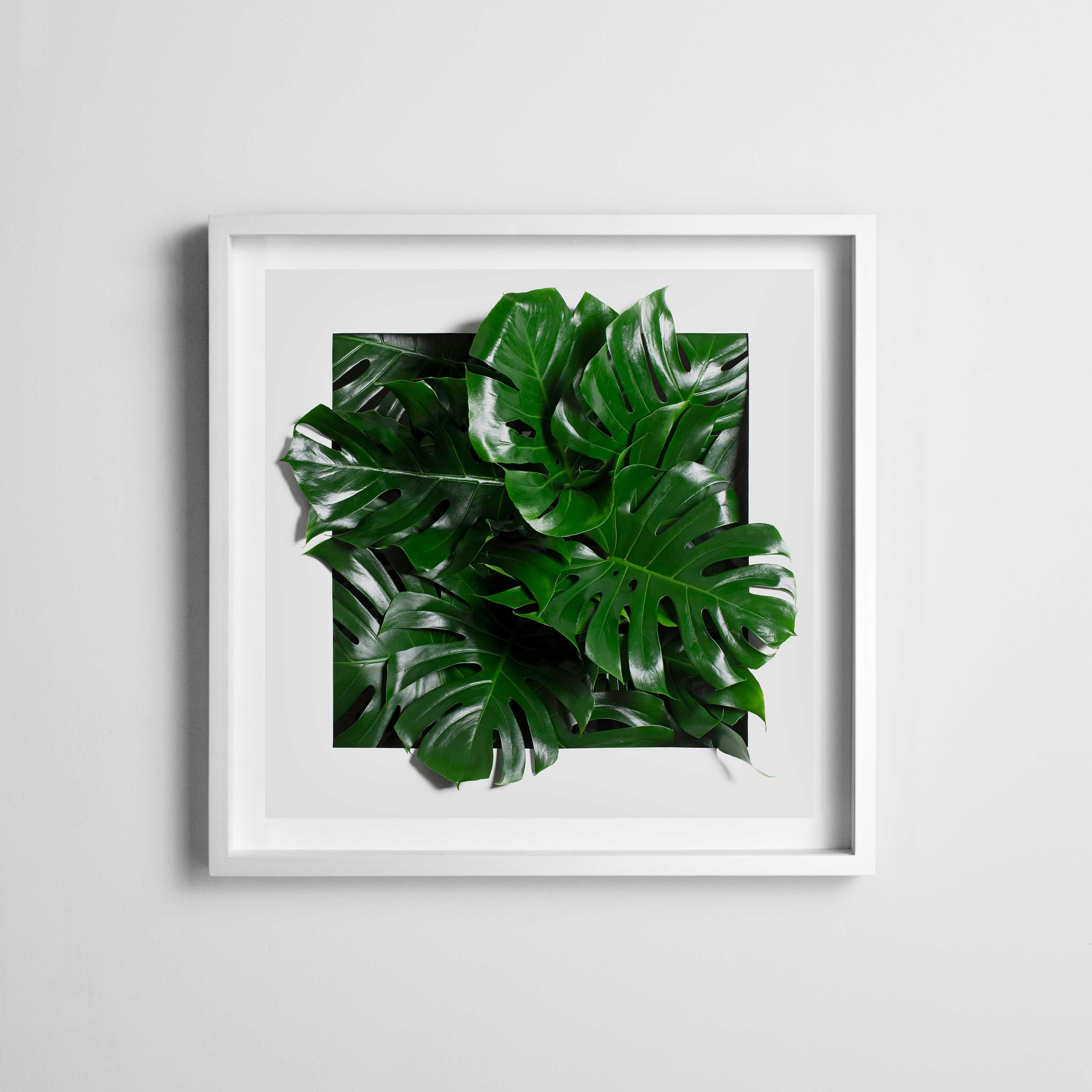 andy b leaf