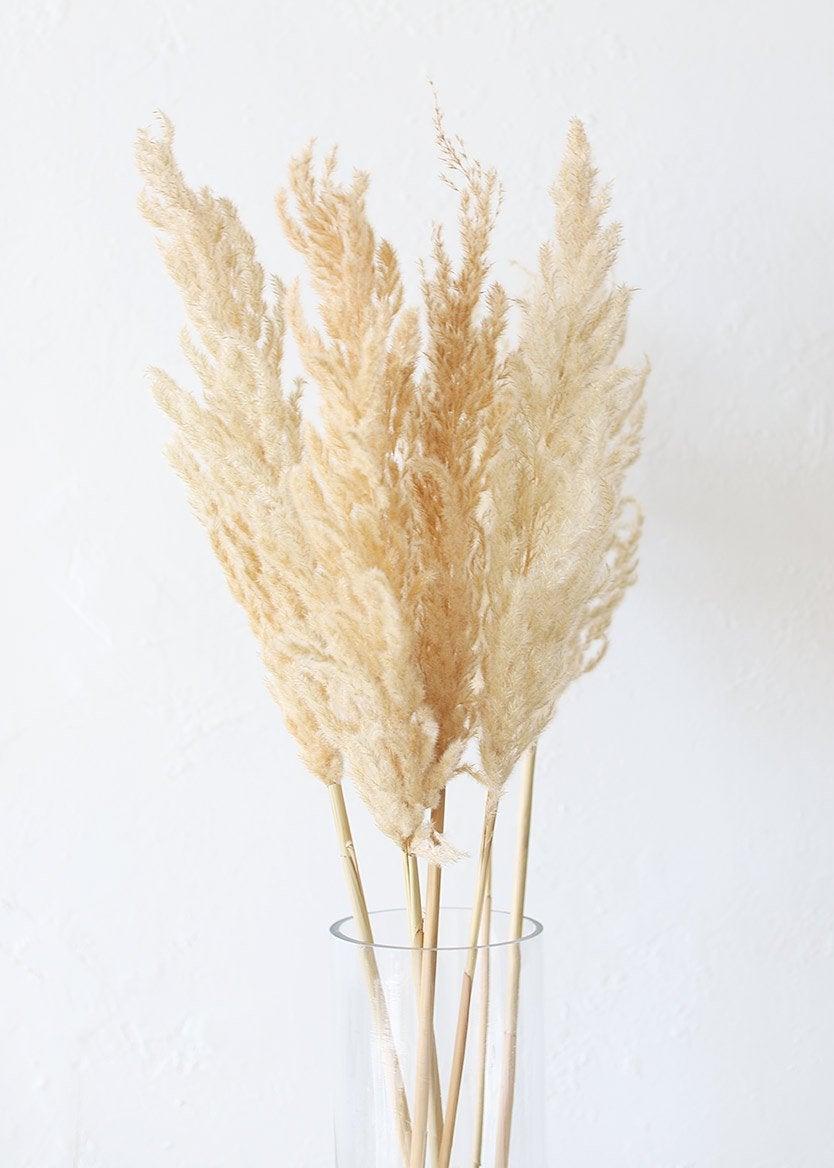 Natural-Blonde-Pampas_x1200