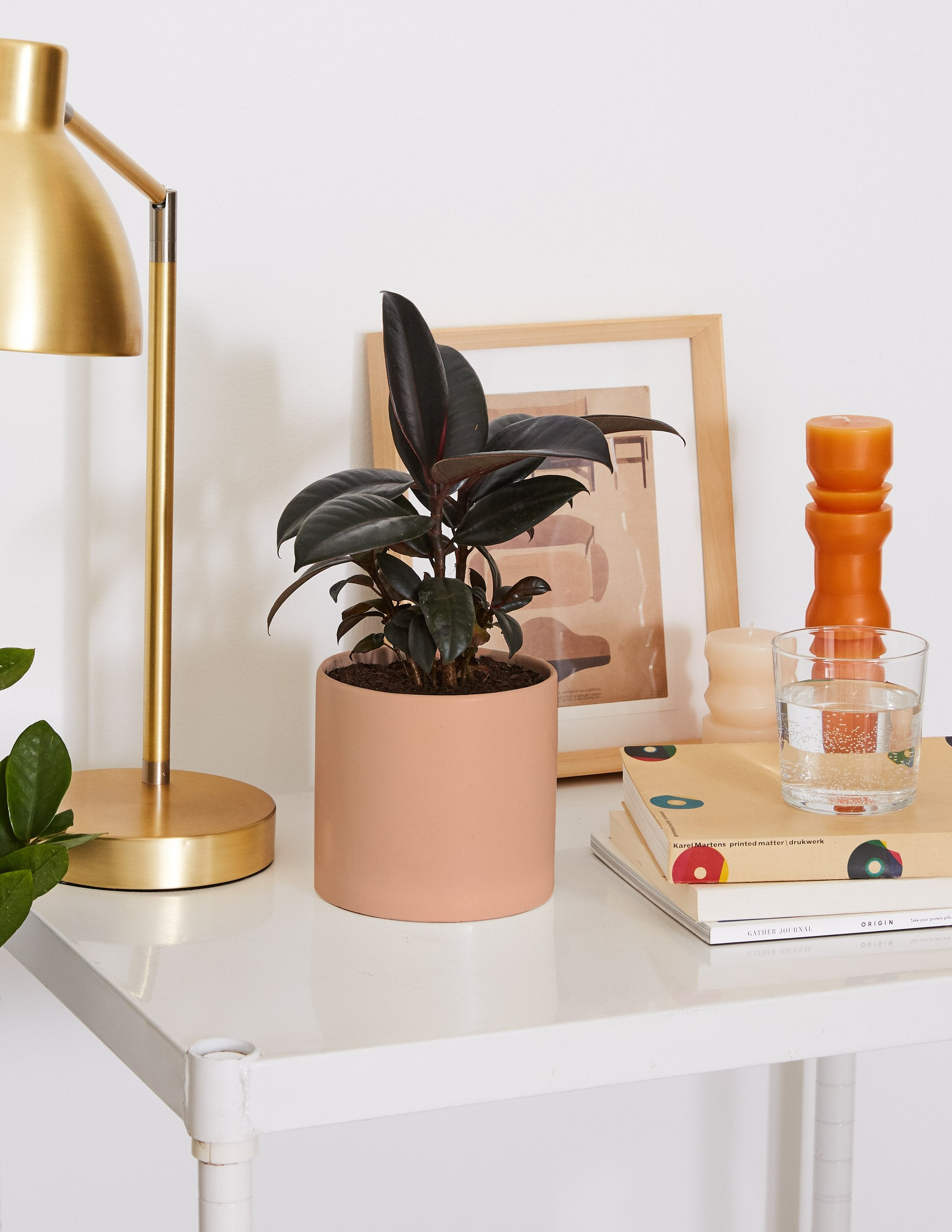 3 Rubber Plant Care Tips You Need To Know