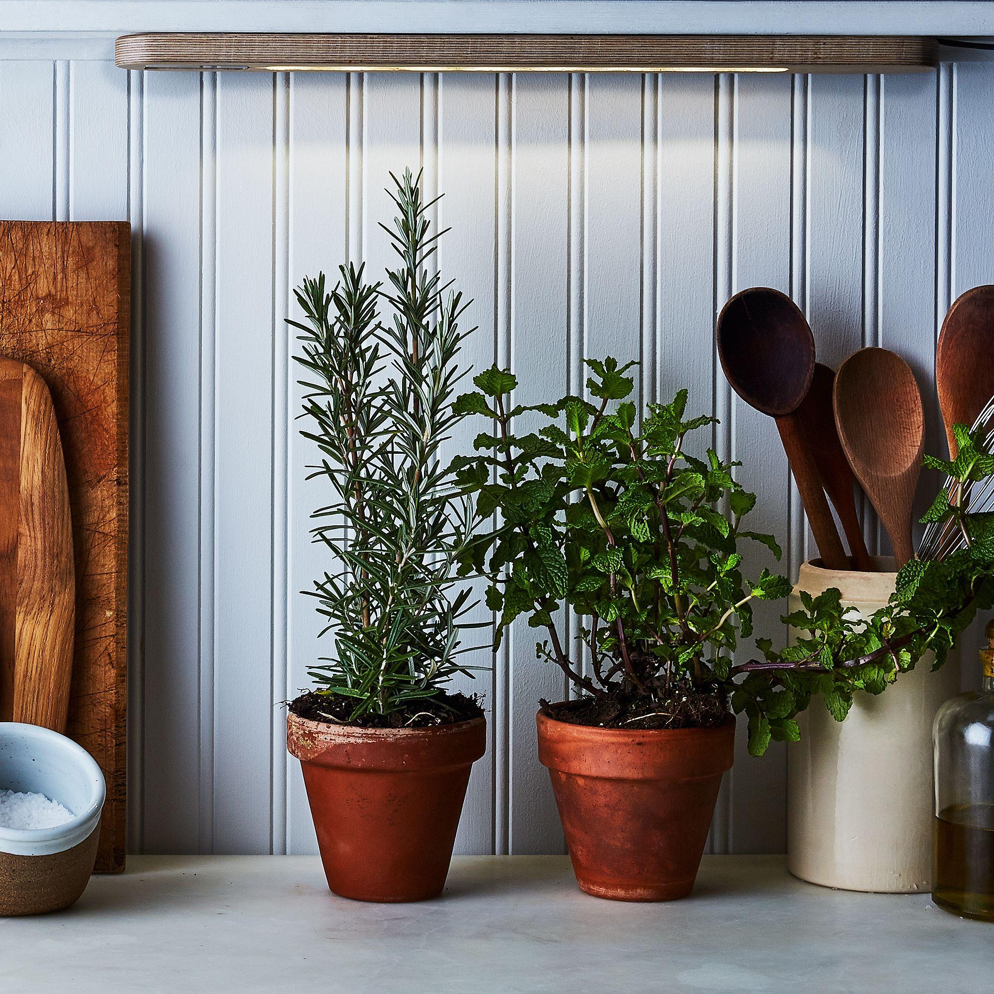 Grow-Anywhere Herb Growbar