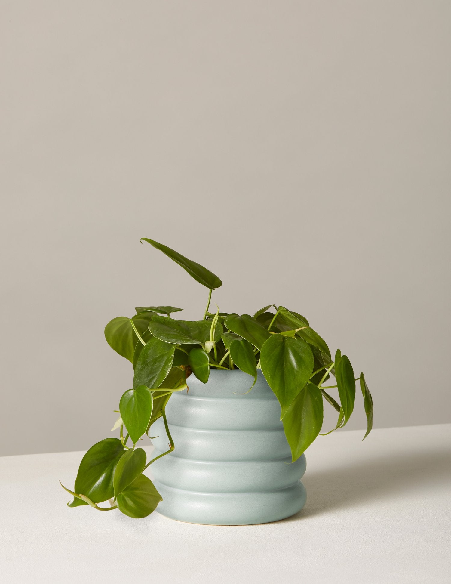 the-sill_philodendron-plant-green_dolores_mint_5_1500x.progressive