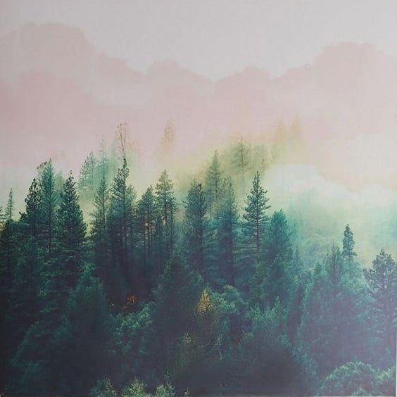 wall mural featuring painted forest background