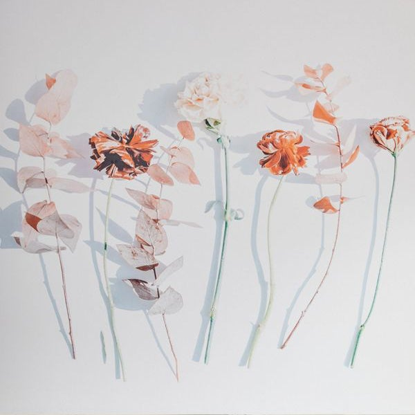 wall mural depicting oversized photographed flower stems