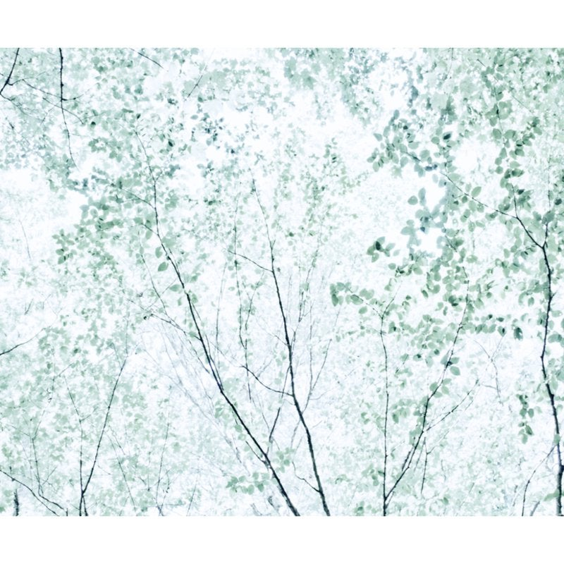 wall mural featuring the branches of a forest