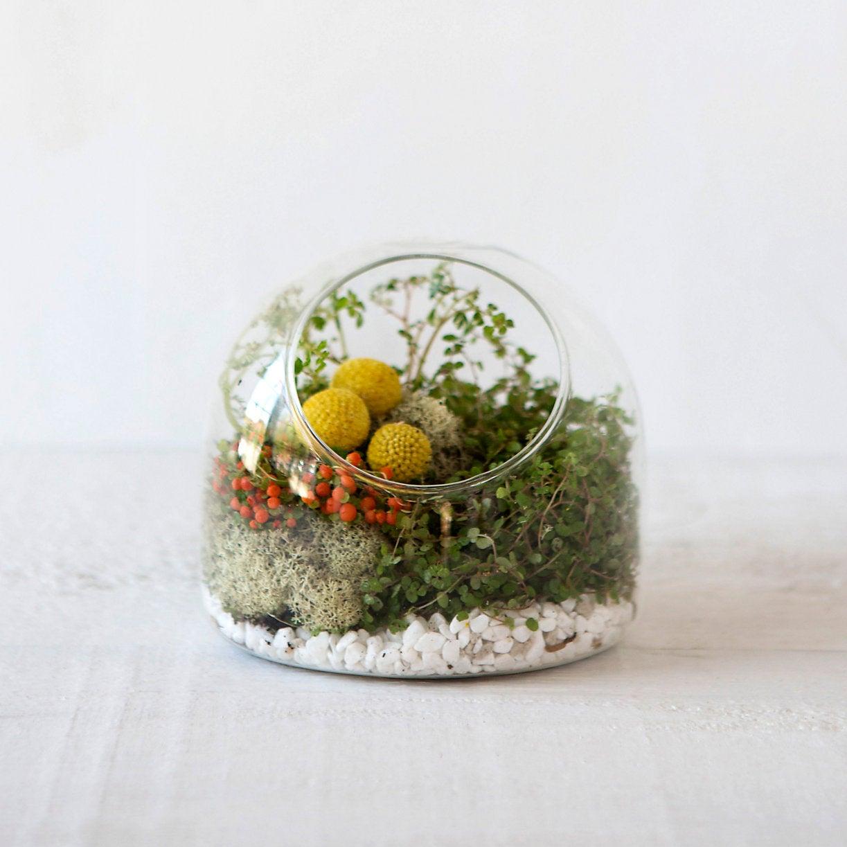 glass globe-like terrarium