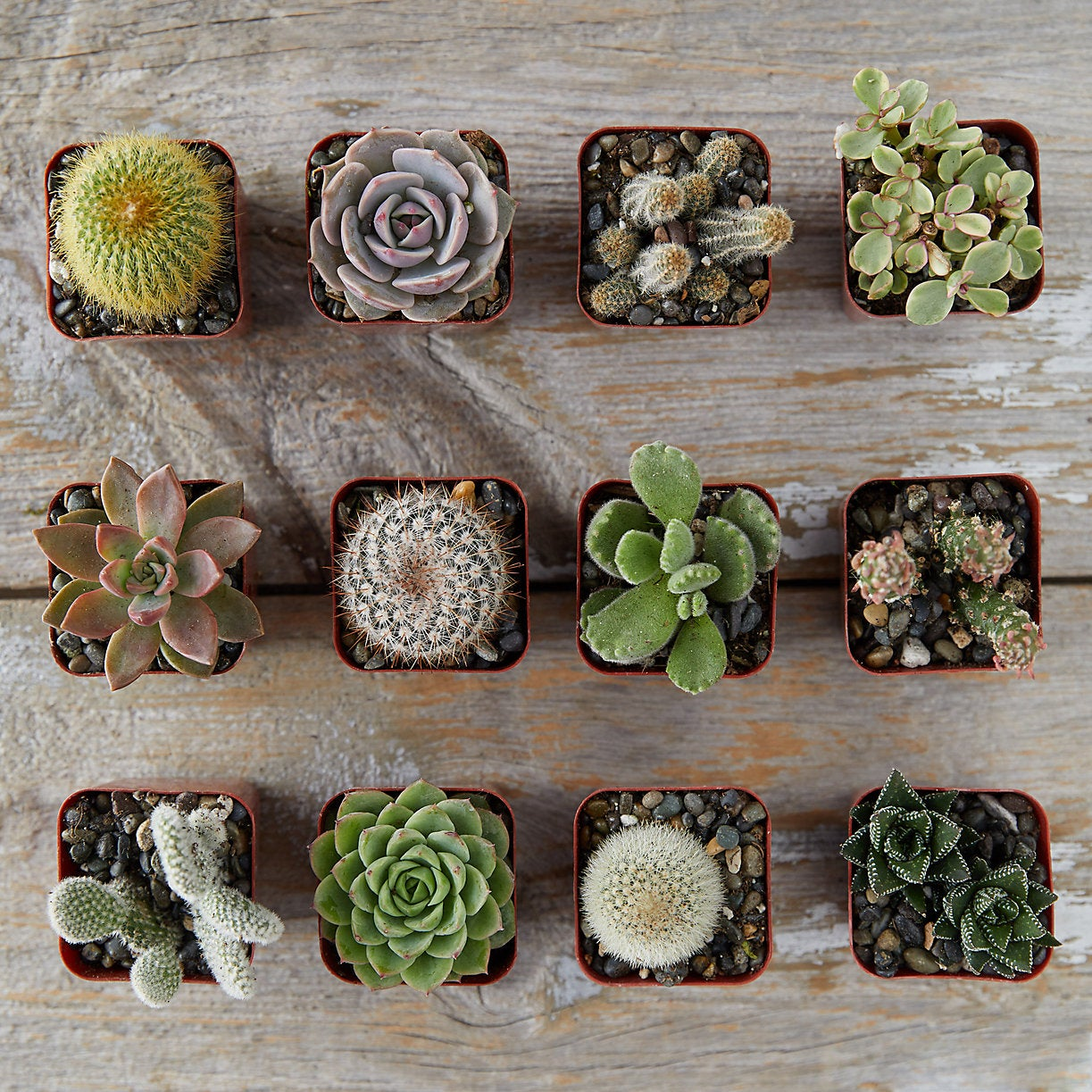 overheard photo of 12 cacti and succulents