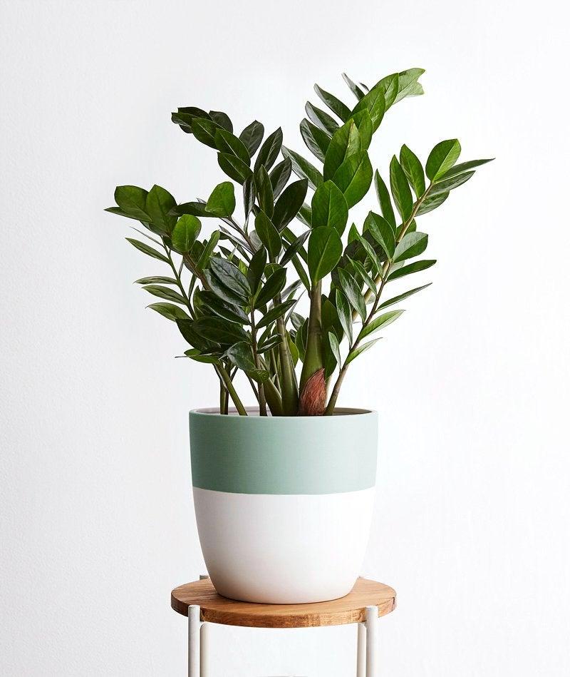 ESTJ – zz plant