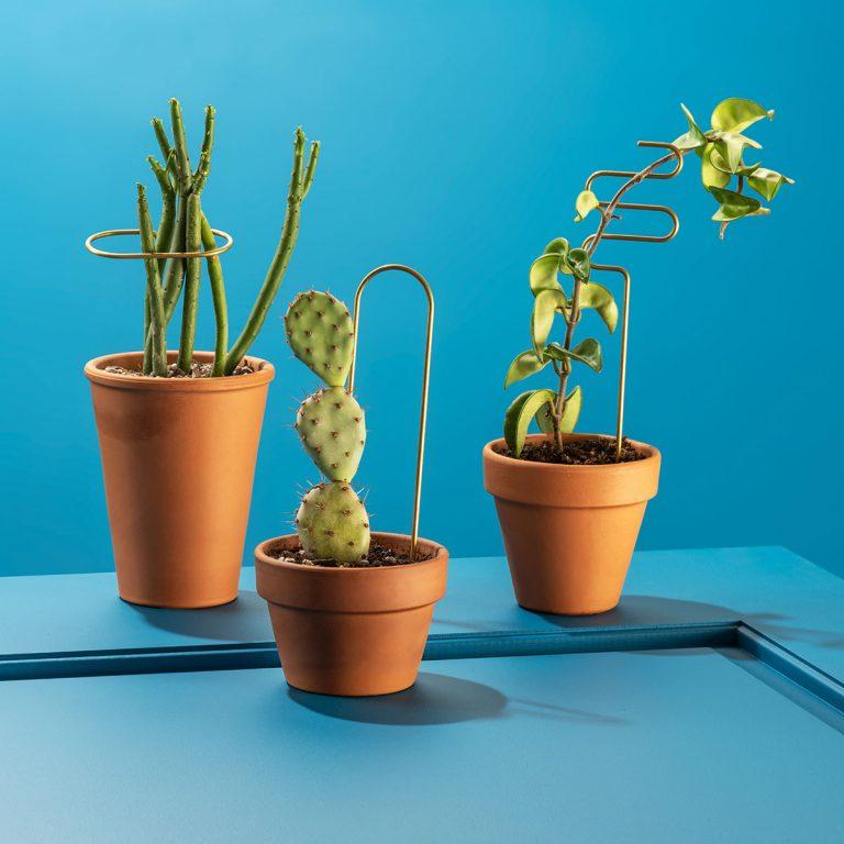 Plant Sticks
