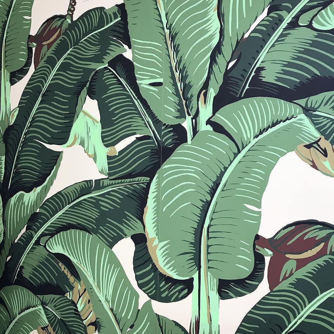 Original-Beverly-Hills-Banana-Leaf-Wallpaper_1080x1080