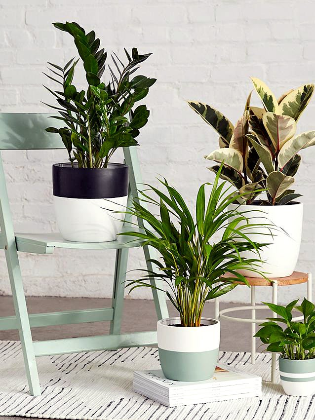 ZZ Plant on mint green chair