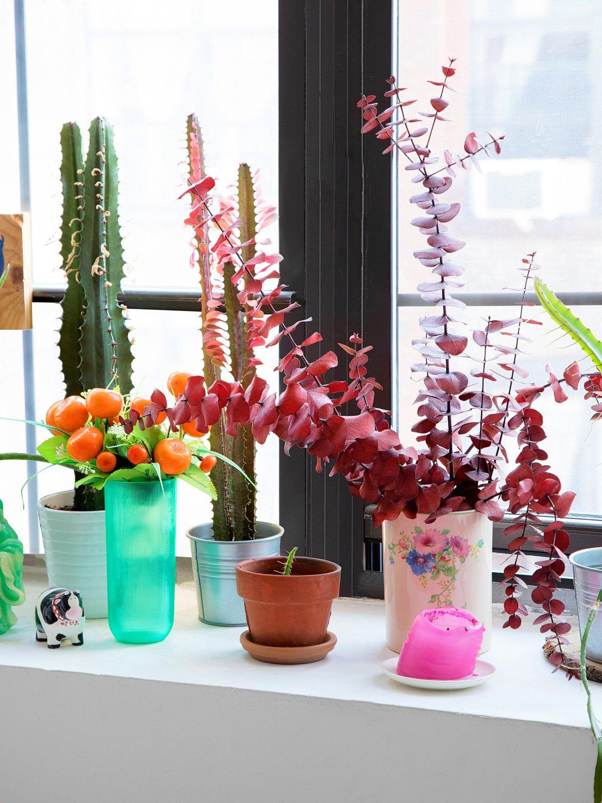 colorful plants on a window sill