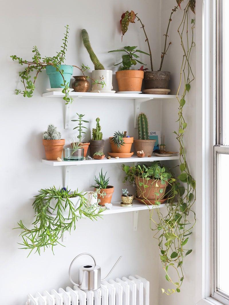 cactus-care-tips-domino