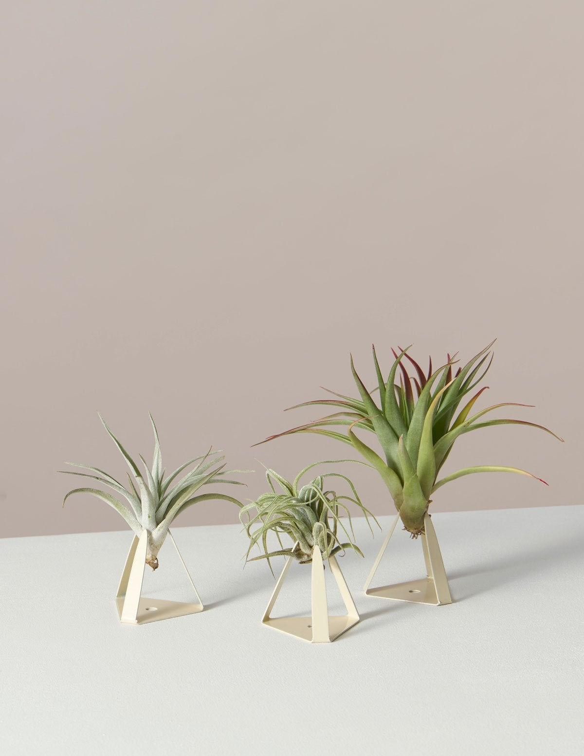 When It Comes to Easy Upkeep Greenery, Air Plants Win