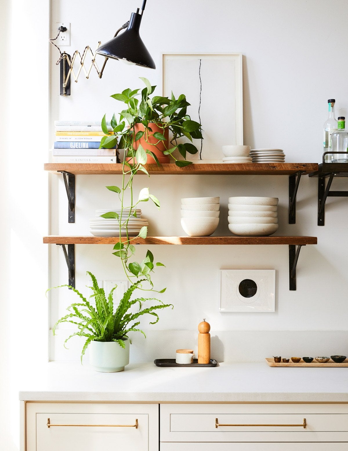 The Bird's Nest Fern Is Trending—Here's How to Care for It