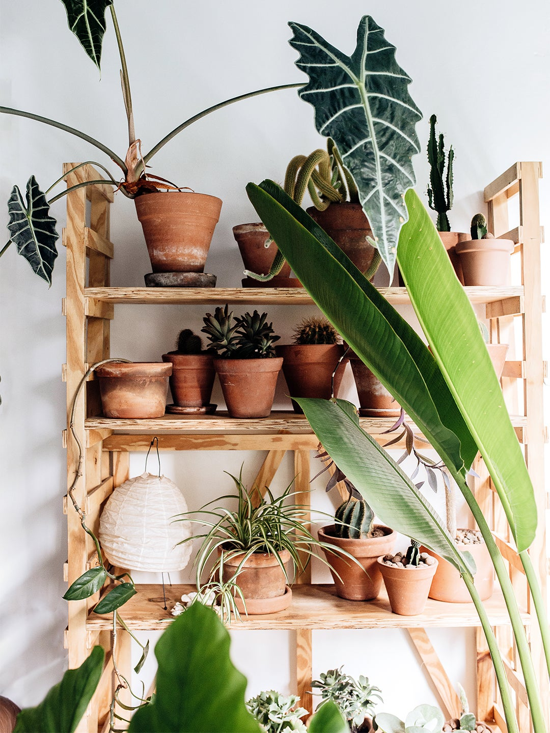 Shelf with assorted plants