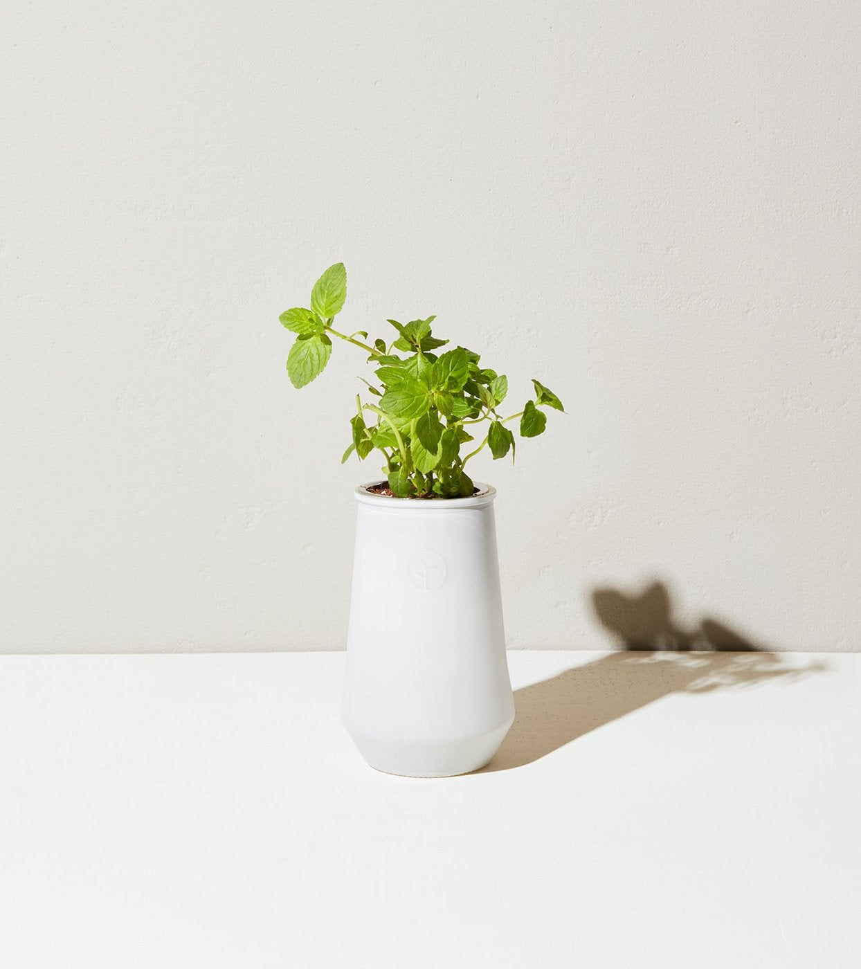 Tapered Tumbler with Mint Plant