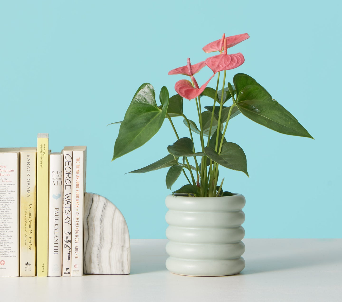 anthurium in blue ribbed pot next to books