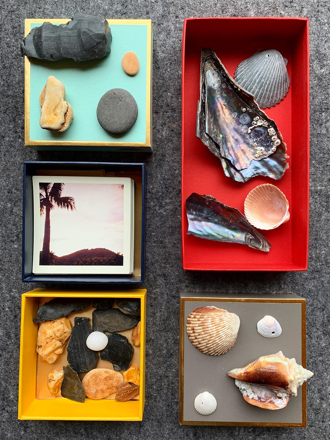 boxes of shells and rocks