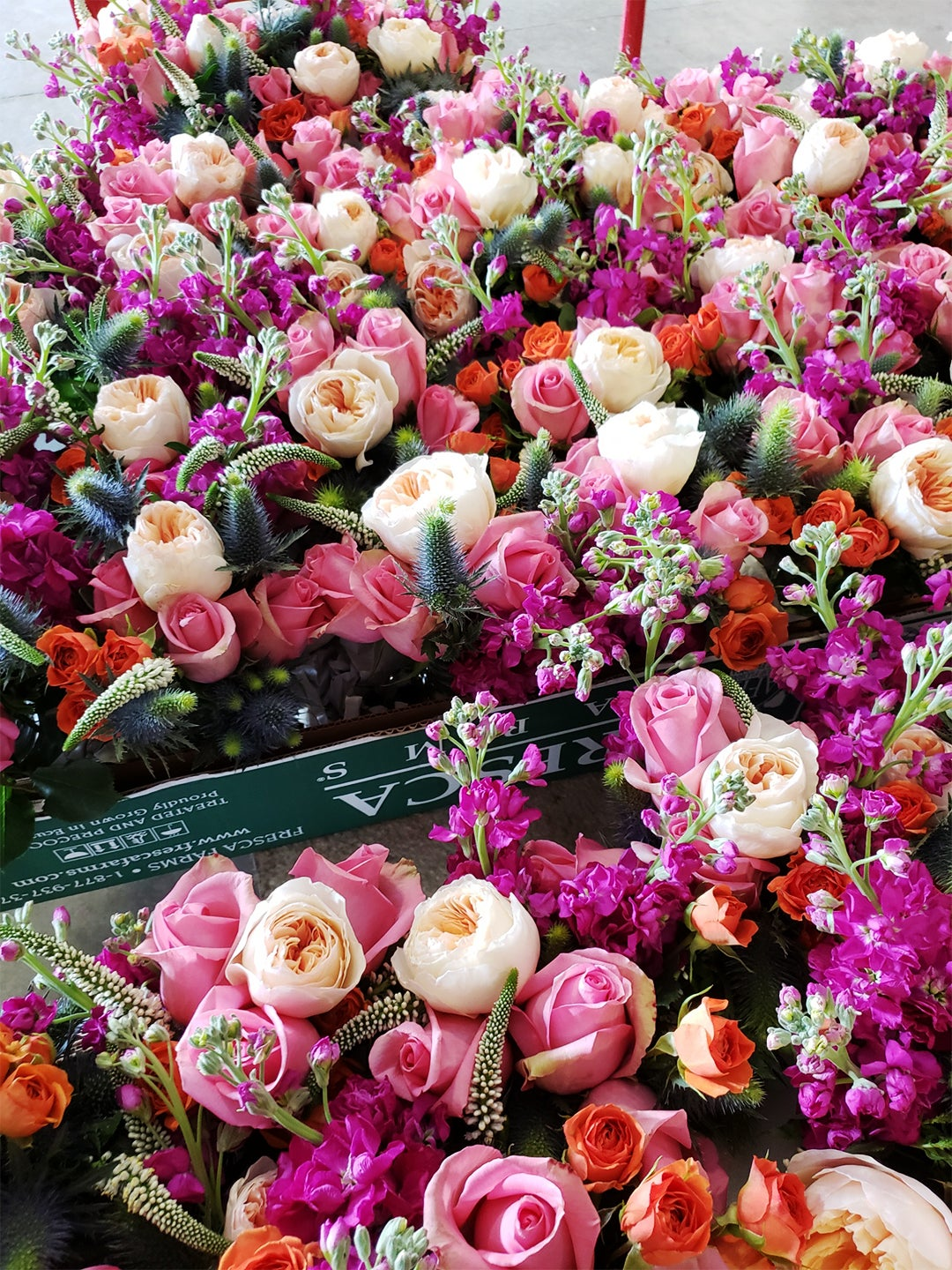 lots of roses in pink and white