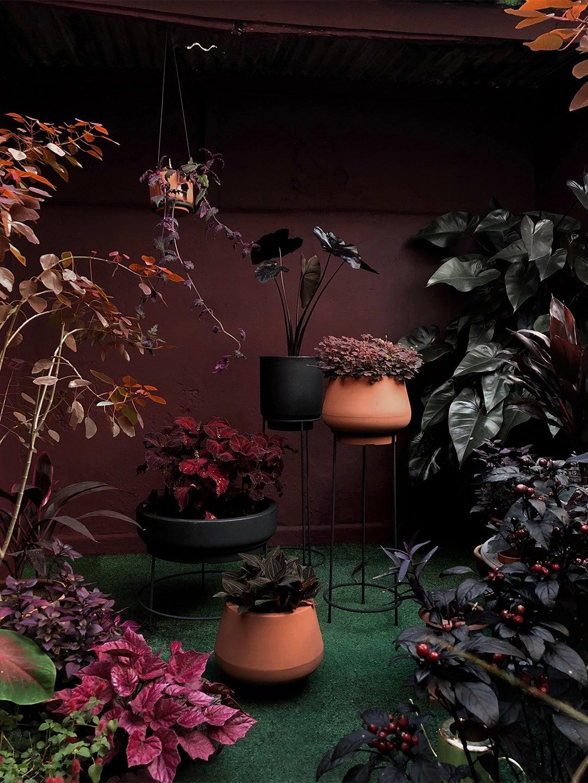 dark purple colored garden