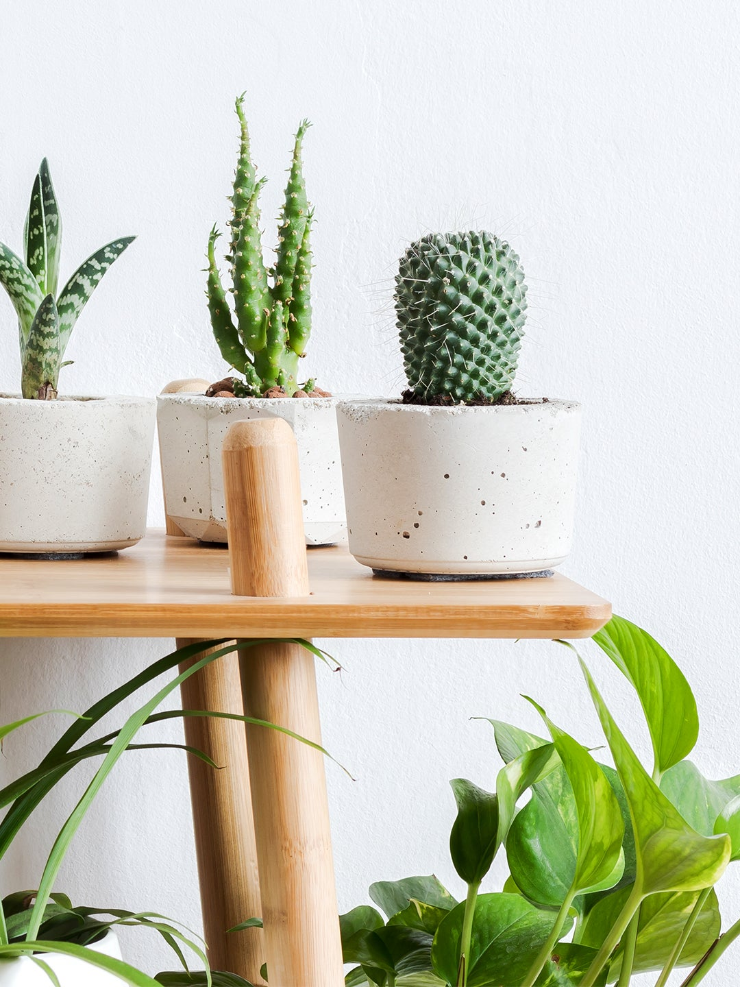 How to Grow Your Very Own Cactus, According to a Plant Pro