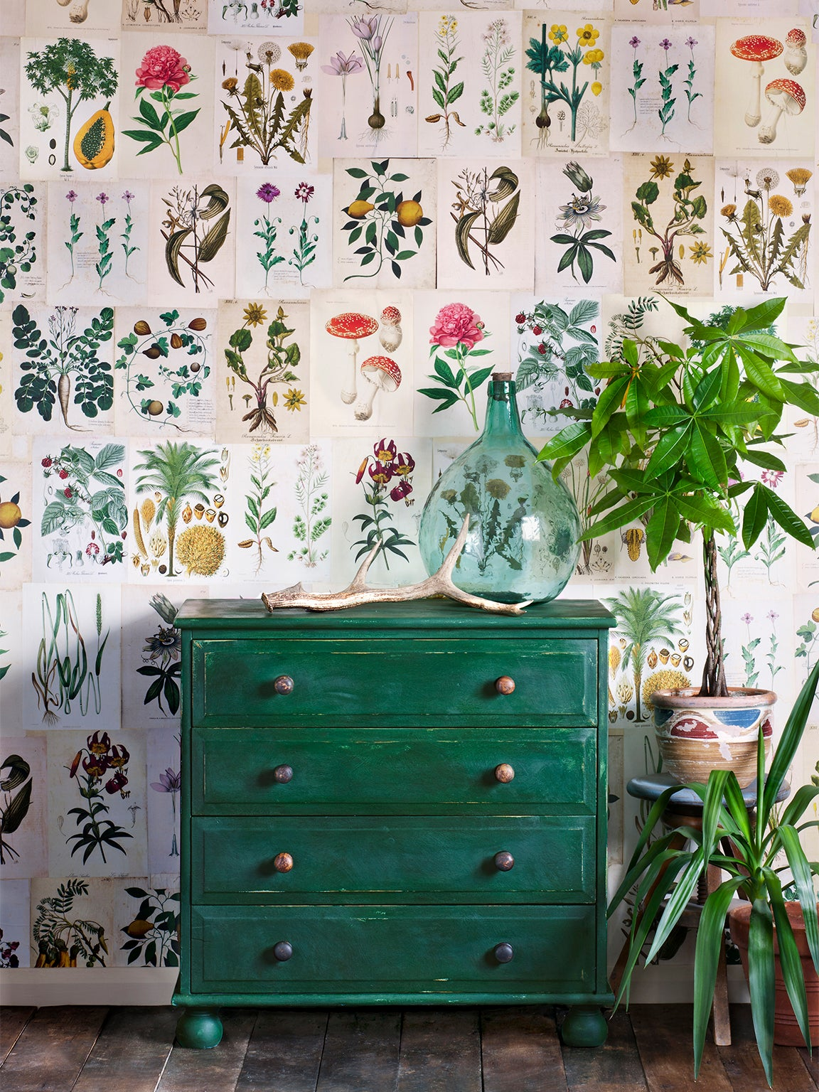 green dresser and plants in front of floral-print wallpaper