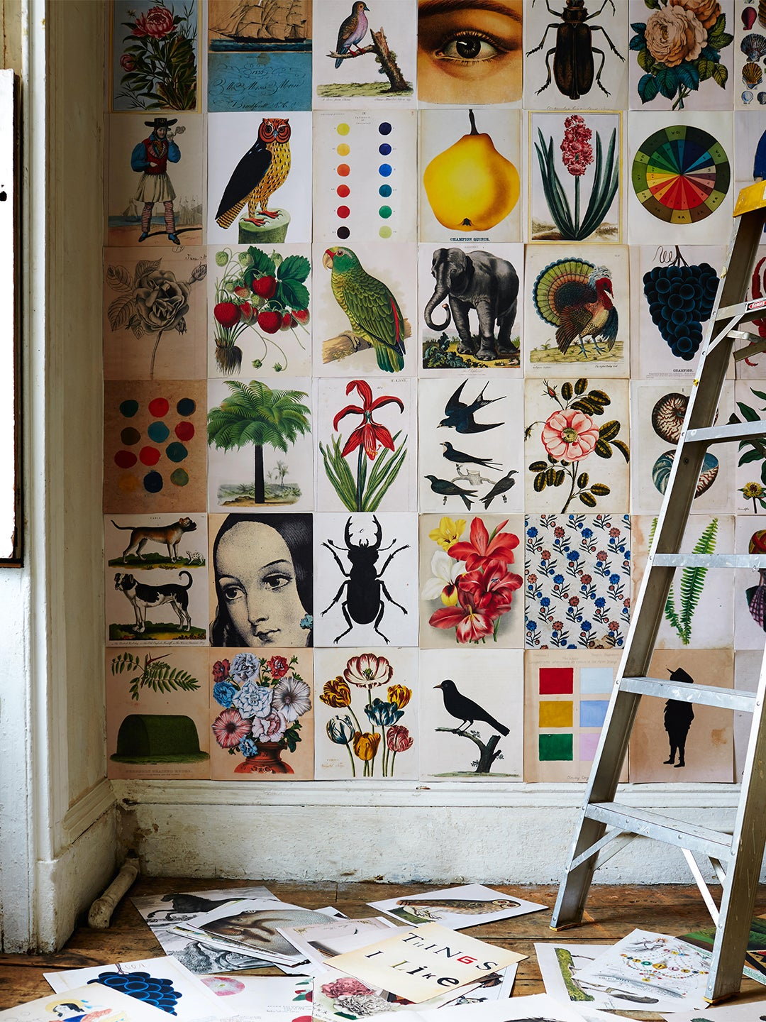 John derian book pages on wall