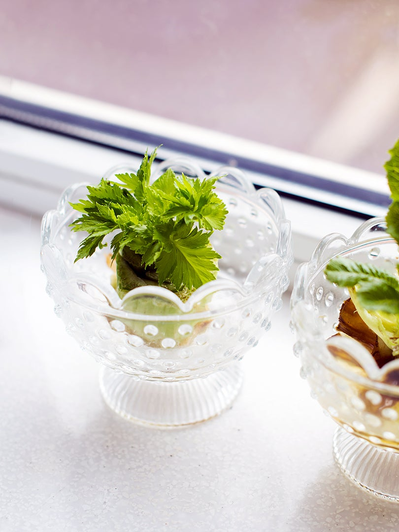 Yes, You Can Regrow Your Vegetables From Scraps