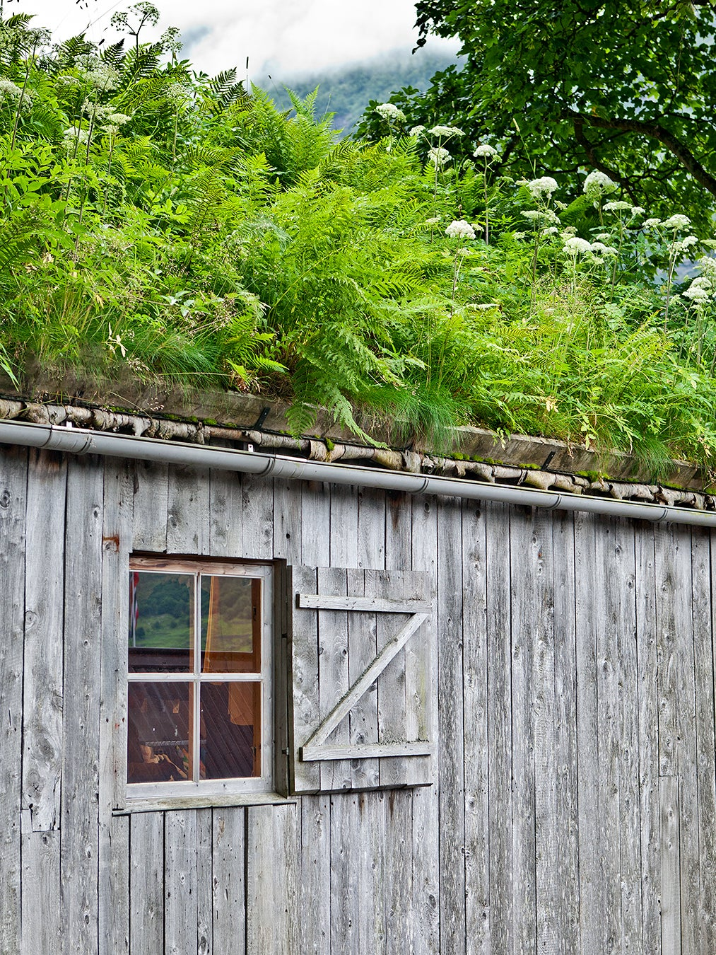 wood shed covered in grass