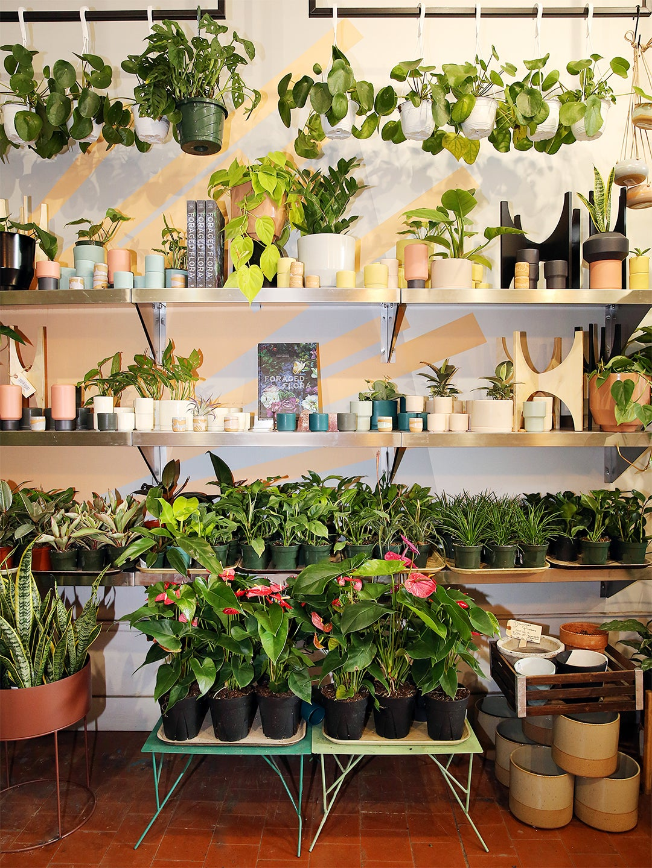 plant-buy-according-zodiac-sign-domino
