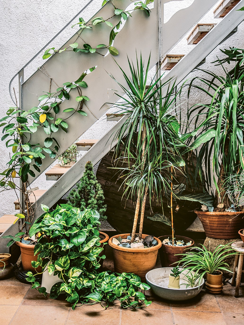 sunny atrium with potted plants