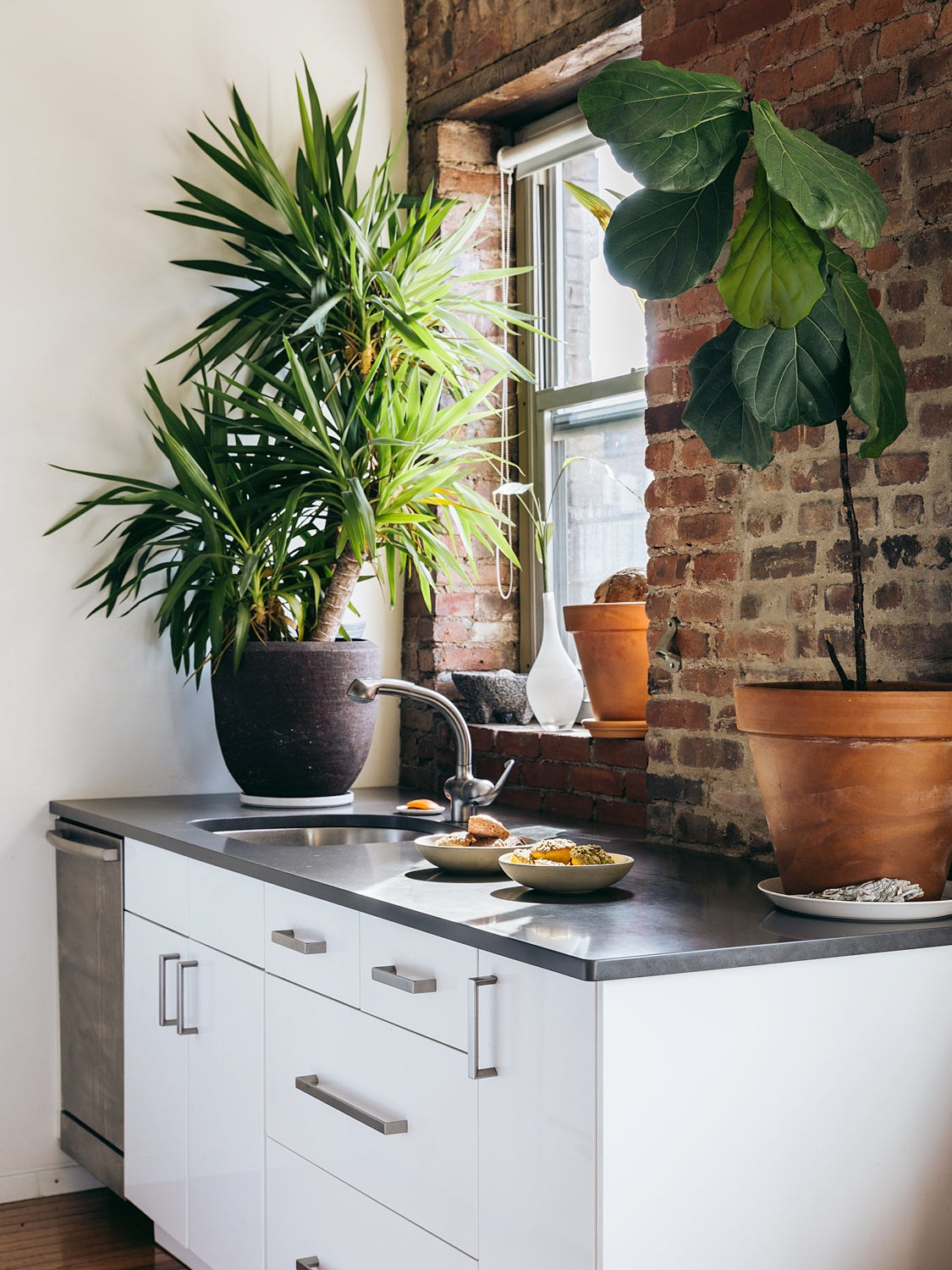 Kitchen counter with large plant
