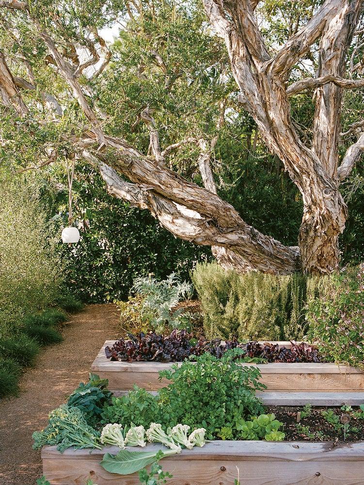 Lauri Kranz vegetable garden